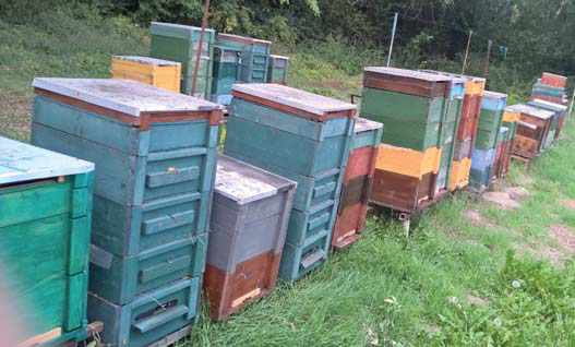 Hédervári termelõi méz