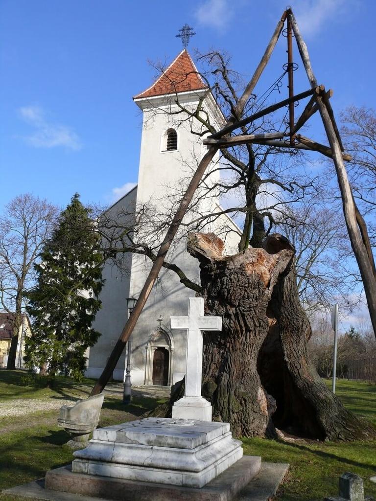 Az Árpád-fa