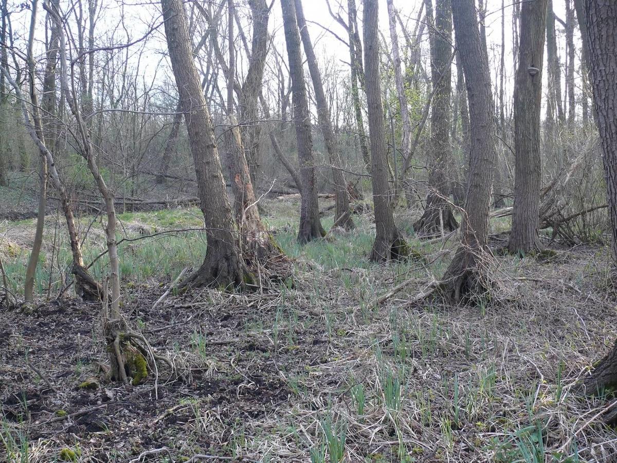 Egeres mocsárerdõ